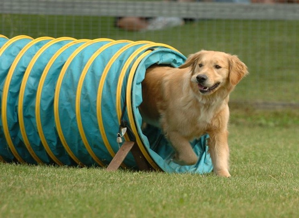 visit cesenatico addestramento cani extrema thule educazione cinofila